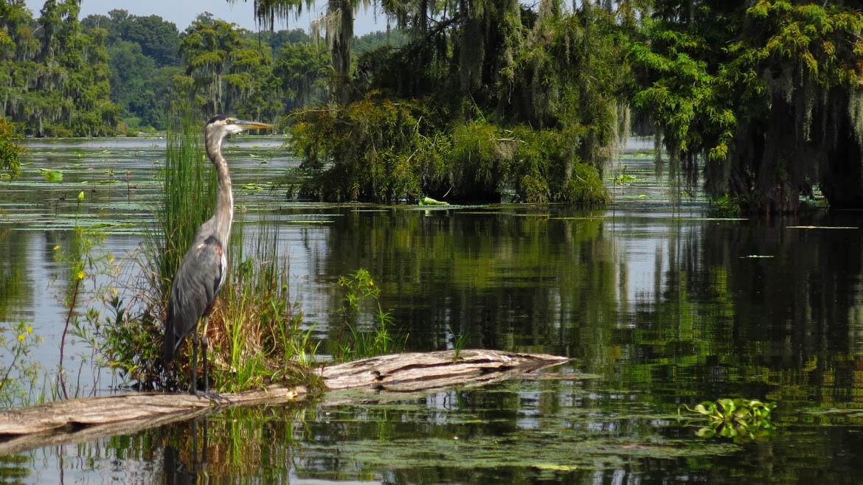 USA, Louisiane bayous2017